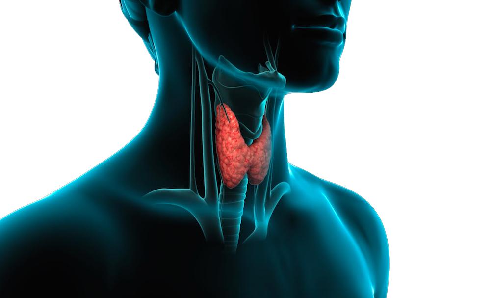 patologie_della_tiroide